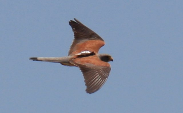 Bird Data Logger : Researchers at doñana biological station csic use suas to