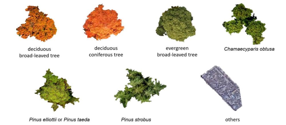 Automatic Classification of Trees with UAV RGB Images and